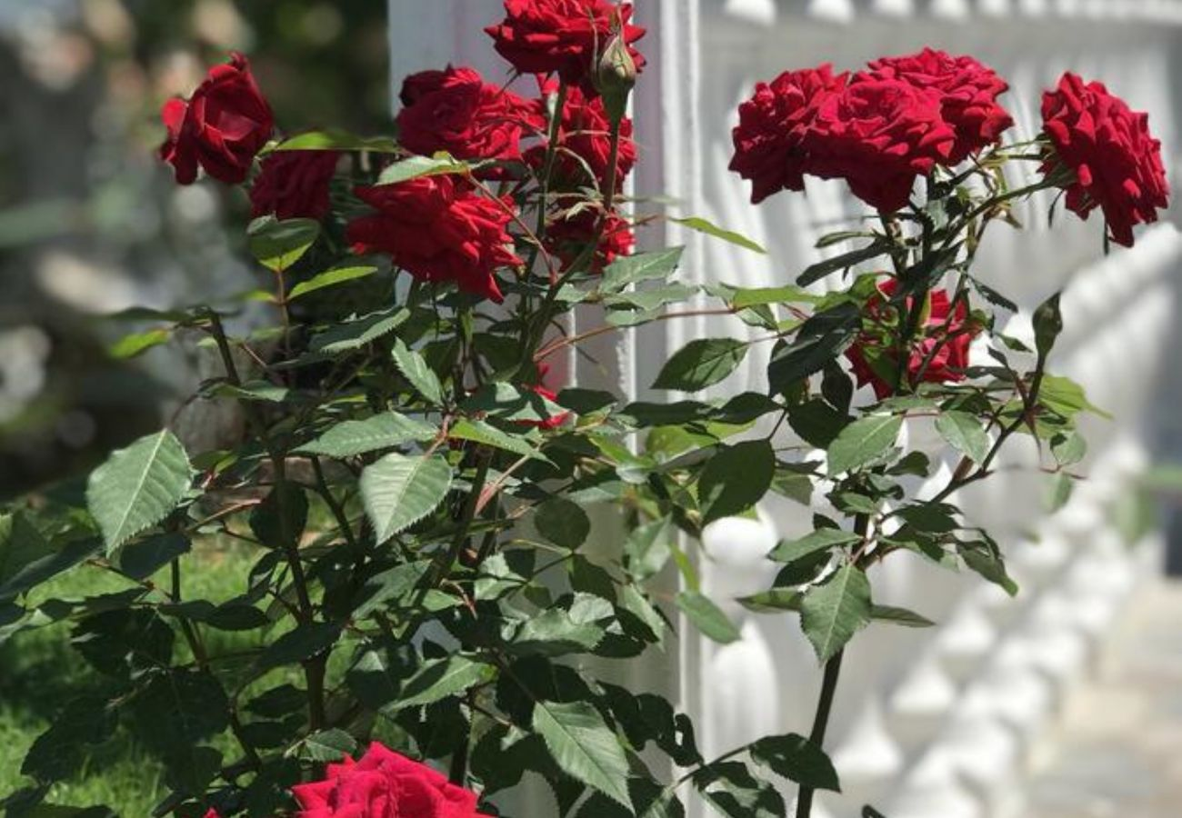Garden Roses in a two bedroom flat in Ksamil, near the beach
